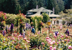 Butgcharf gardens summer rose garden
