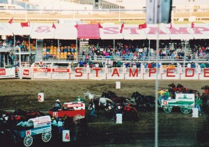 Chuck wagon races at the Calgary Stampede