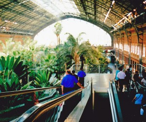 MADRID ESTACION DE ATOCHA, it is like a huge fernery