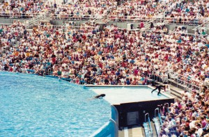 San Diego Sea World Killer whale show