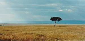 I love the Serengeti with its lone tree and where the suns rays stretch forever at dusk