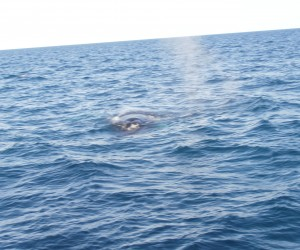 We saw twp Humpback whales, that circled our boat