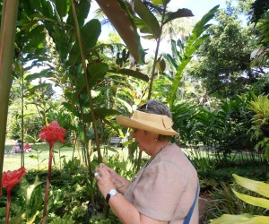 Michelle snapping at the Ginger plants at the Cairns Botanical gardens