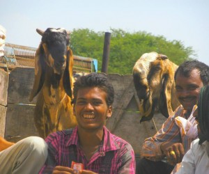 Road to Agra happy goat vendors at goat sales