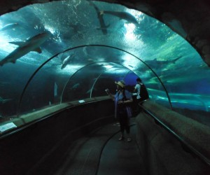 Michelle surrounded by sharks in Underwater World Sentosa Island